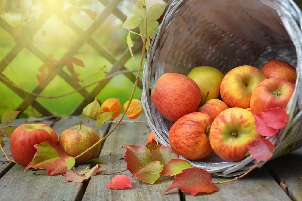 apple, autumn, leaf
